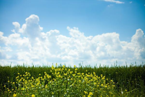biobränsle laholm